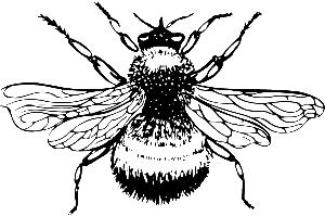 bumblebee-38394
