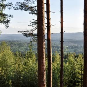 Sälboda Gård – Utsikt över skog