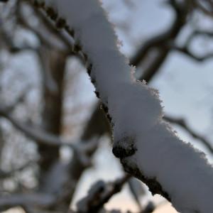 Sälboda Gård – Vinter, skog