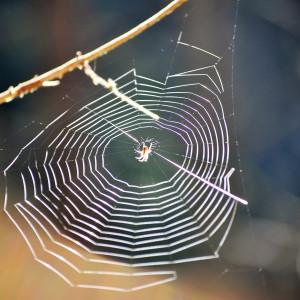 Sälboda Gård – Spindelnät