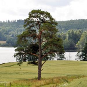 Sälboda Gård – Sommar i Värmland