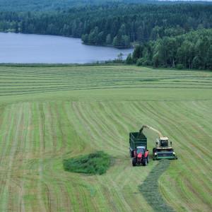 Sälboda Gård – Tröska på gärdet, sommar