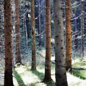 Sälboda Gård – Vacker skog