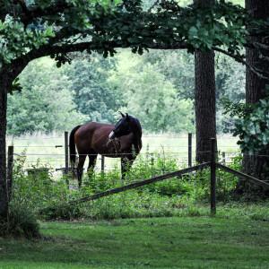 Sälboda Gård – Hästhage