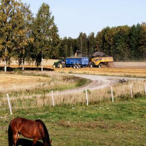 Sälboda Gård – Häst betar i hage